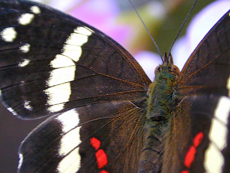 butterfly photos 1
